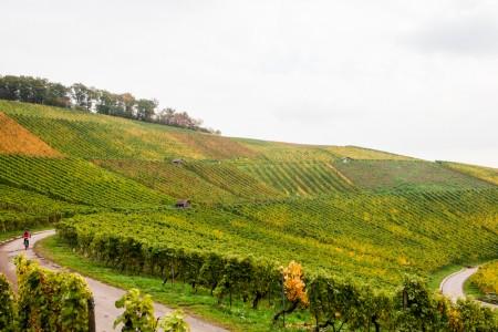 WeinPlaces - November - das Jahr des Winzers - Mirja Hoechst-3