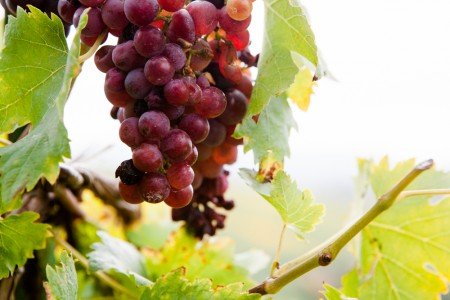 WeinPlaces - November - das Jahr des Winzers - Mirja Hoechst-4
