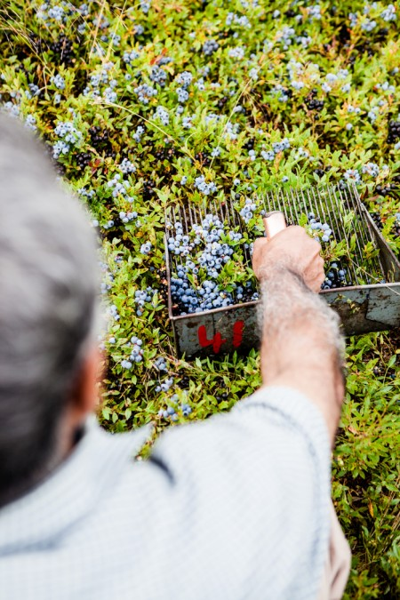 Wilde Blaubeeren aus Kanada - ein Reisebericht - www.kuechenchaotin.de-19
