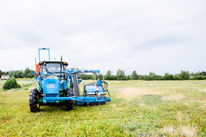 Wilde Blaubeeren aus Kanada - ein Reisebericht - www.kuechenchaotin.de-20