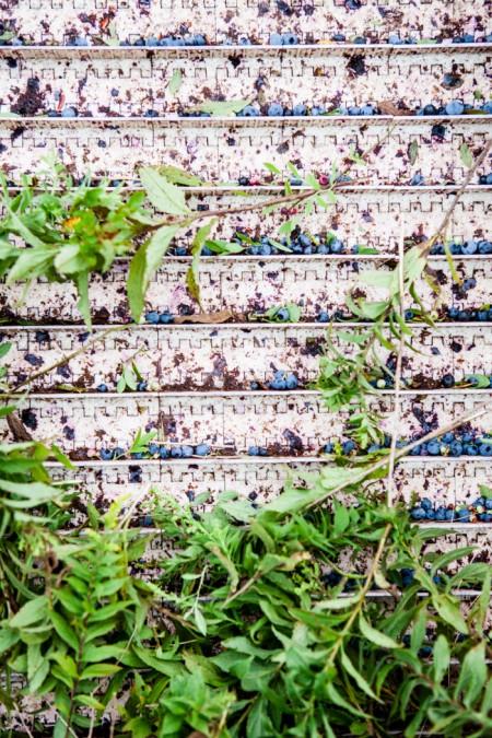 Wilde Blaubeeren aus Kanada - ein Reisebericht - www.kuechenchaotin.de-33