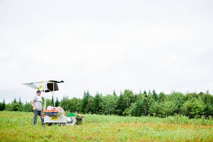 Wilde Blaubeeren aus Kanada - ein Reisebericht - www.kuechenchaotin.de-36